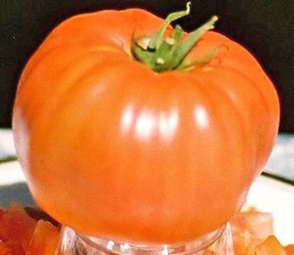 Soldacki Tomaten Samen