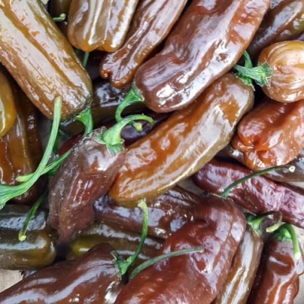 Habanero Chocolate Long Chili Samen