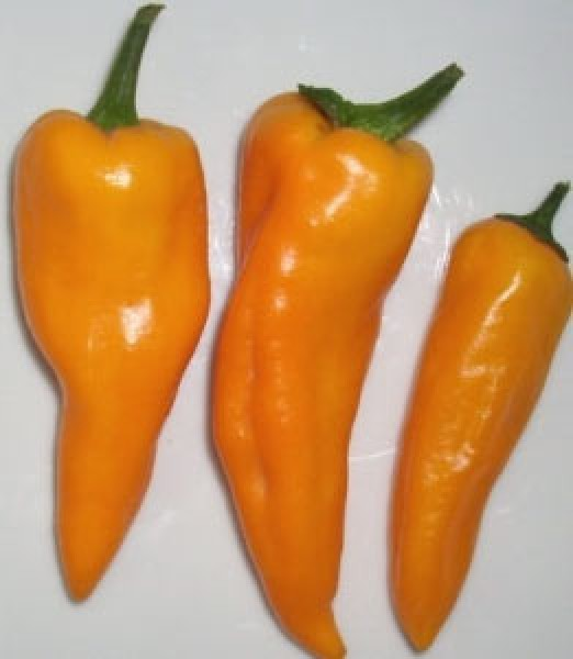 Cheyenne Chili Samen