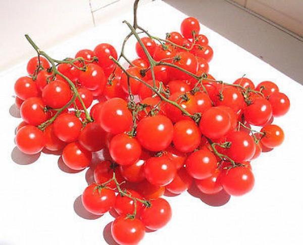 Riesentraube Tomaten Samen