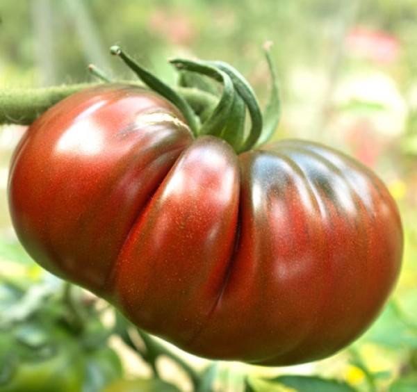 Black Russian Tomaten Samen