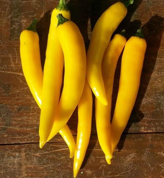 Cayenne Yellow Chili Samen