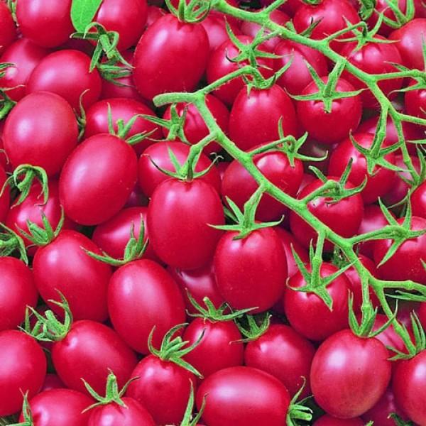 Pink Grape Tomaten Samen
