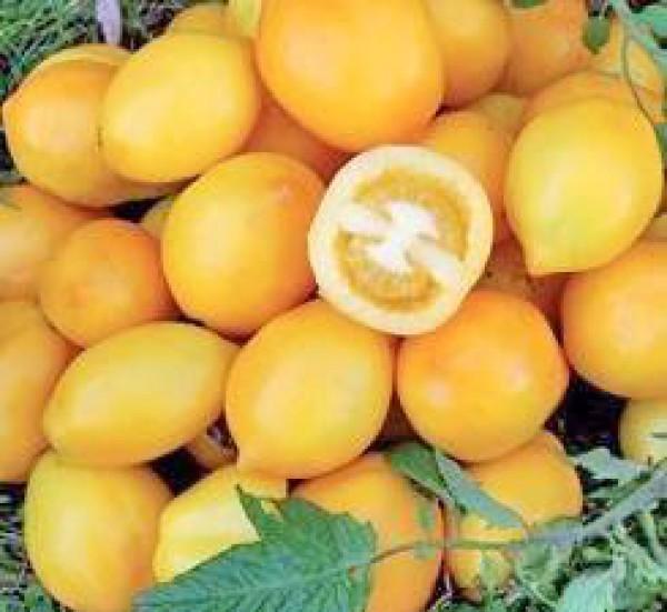 Lemon Plum Tomaten Samen