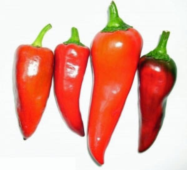 Capia Pepper Chili Samen