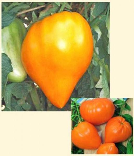 German Orange Strawberry Tomaten Samen
