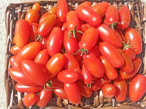 San Marzano Mini Tomaten Samen