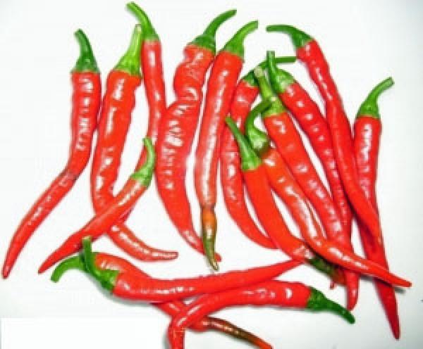 Ring of Fire Chili Samen