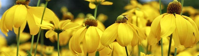 gelbe_Blumen
