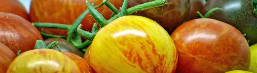 exotische Tomaten