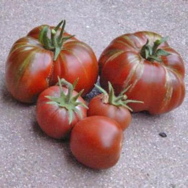 Black Prince Tomaten Samen