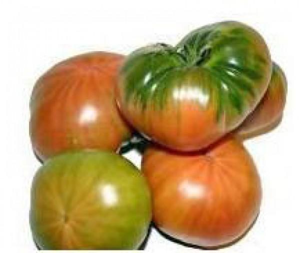 Muchamiel Tomaten Samen