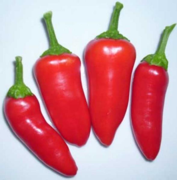 Fresno Chili Samen