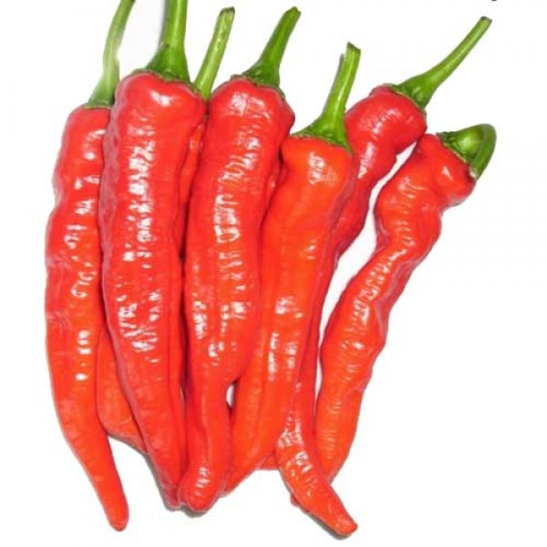 Mesilla Chili Samen